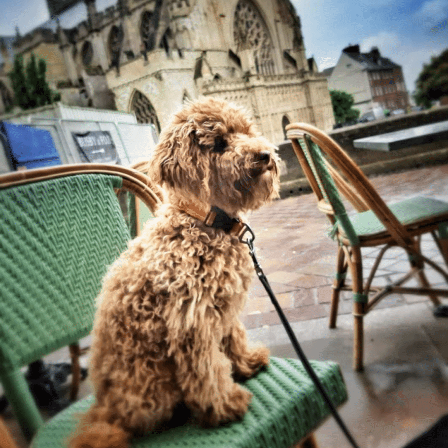 Barley, the Growth Guides Marketing dog and Chief Wellbeing Officer outside Exeter Cathedral